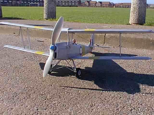 Tiger Moth - oz13252