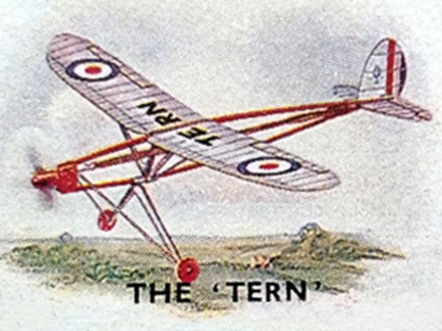 Tern - oz13283