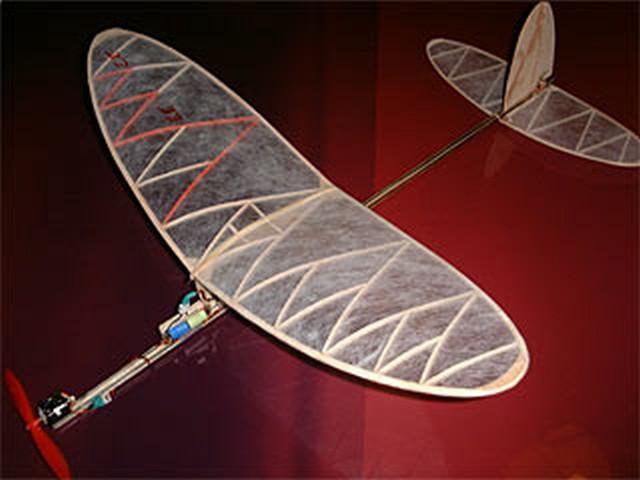 Feather (oz3753) by John O'Sullivan