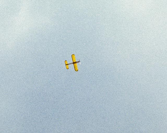 Fledgling - oz4437 - Sam