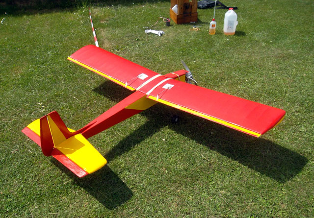 Senior Falcon - oz6137 - Reinhard Lehmann