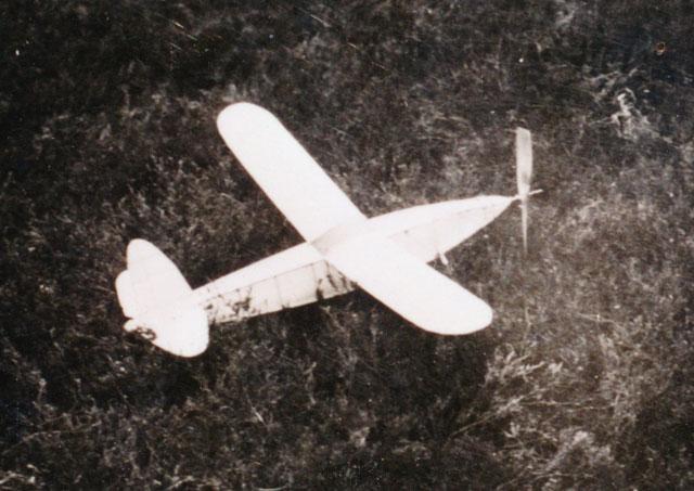 Sparrowhawk - oz9436 - Joost