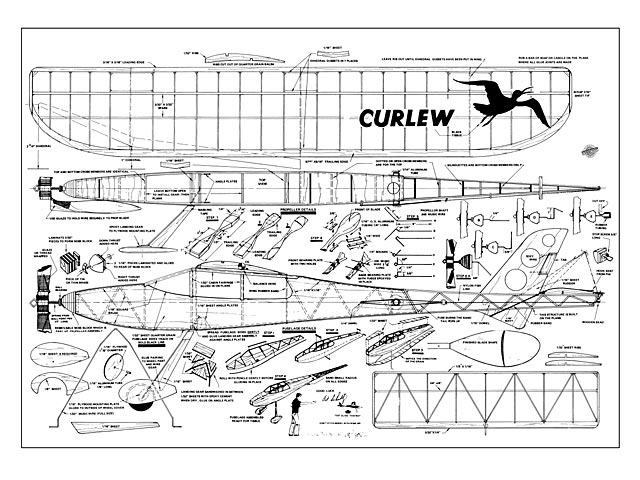 Curlew - 8908